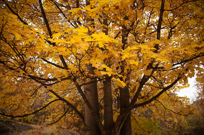 Arrowtown-Autumn-21